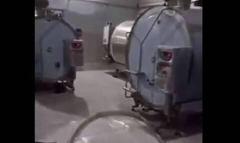 Απίστευτο: Εργαζόμενος σε εταιρεία γαλακτοκομικών έκανε μπάνιο με γάλα στη δουλειά (video)