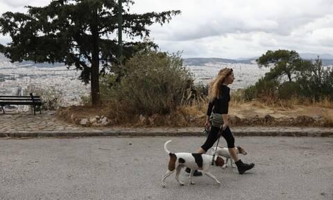 Lockdown: Βόλτες με κατοικίδια στην καραντίνα - Όλα όσα πρέπει να γνωρίζετε