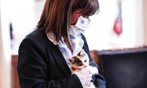 Κατερίνα Σακελλαροπούλου: Υιοθέτησε ένα πανέμορφο γατάκι