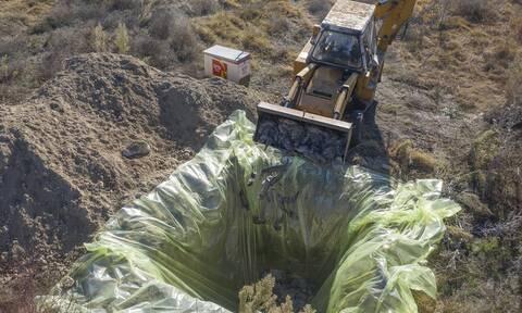 Κοζάνη: Θανάτωση 2.500 μινκ σε φάρμα στο Καλονέρι - Βρέθηκαν θετικά στον κορονοϊό