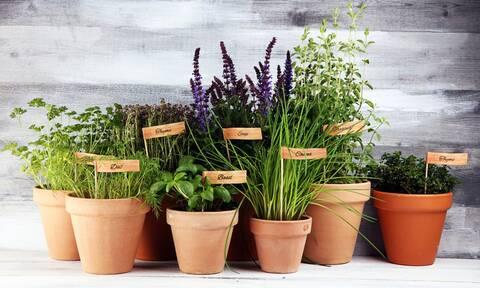 5 βότανα με φαρμακευτικές ιδιότητες & πώς να τα χρησιμοποιήσετε (βίντεο)