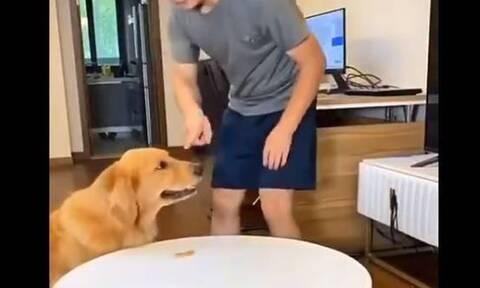 Τρομερός σκύλος: Κορόιδεψε το αφεντικό του – Έφαγε τη λιχουδιά και την αντικατέστησε!