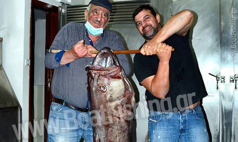 Εύβοια: Εντυπωσιακή ψαριά - Ψαράς έπιασε βλάχο 45 κιλών στο παραγάδι