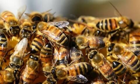 Τραγωδία στη Ζάκυνθο: Νεκρός 48χρονος από επίθεση μελισσών