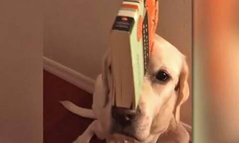 Έβαλαν ένα βιβλίο στο κεφάλι του σκύλου και αυτό που κάνει είναι… θεϊκό
