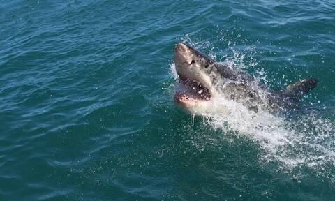 Αυστραλία: Φρικτός θάνατος για σέρφερ - Τον κατασπάραξε καρχαρίας (vid)