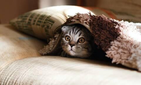 Είσαι αγχωμένη; Η γάτα σου μπορεί να σε βοηθήσει