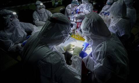 Κορονοϊός - Εφιάλτης: Συγγενικοί ιοί του COVID-19 βρέθηκαν σε κατεψυγμένες νυχτερίδες