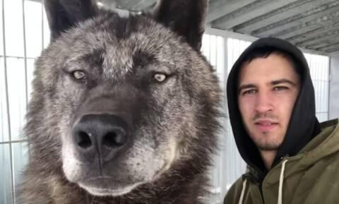 Απίστευτο: Δείτε πώς είναι ο μεγαλύτερος λύκος στον πλανήτη (video)