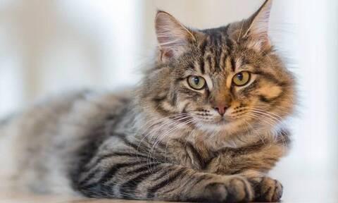 Τελικά πόσα χρόνια ζουν οι γάτες;