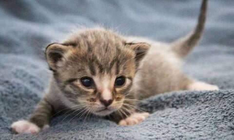 Τα πιο αξιολάτρευτα γατάκια είναι αυτά (pics)