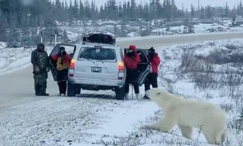 Η στιγμή που τουρίστες έρχονται… φάτσα κάρτα με πολική αρκούδα