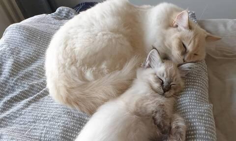 Snorose & Klopp: Οι γάτες με τους 53.000 followers στο Instagram