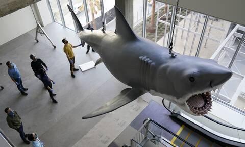 Ο καρχαρίας του Jaws έχει όνομα και σε λίγους μήνες θα βρίσκεται σε μουσείο