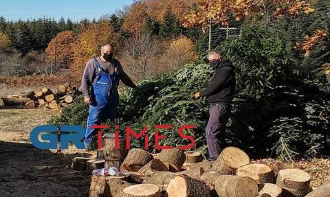 Κορονοϊός: «Στον αέρα» οι ελατοπαραγωγοί – Τι θα γίνει φέτος με τα χριστουγεννιάτικα δέντρα