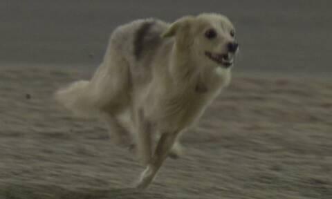 Formula 1: Απίστευτο! Σκύλος μπούκαρε στην πίστα και σταμάτησε τα μονοθέσια (videos)