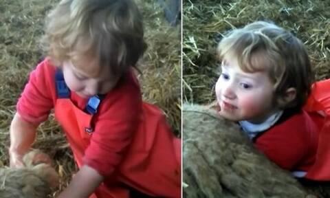 Απίστευτο! Γενναίο κοριτσάκι ξεγεννάει προβατίνα