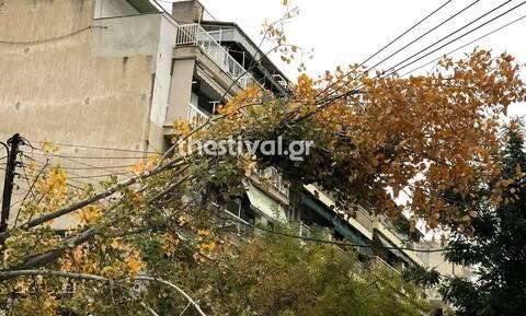 Κακοκαιρία: Πτώσεις δέντρων στη Θεσσαλονίκη - Προβλήματα σε Πιερία, Ημαθία και Κατερίνη (pics)