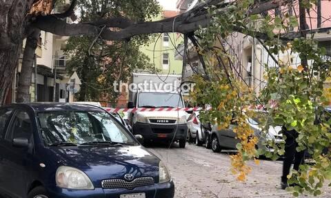 Κακοκαιρία: Πτώση δέντρων στη Θεσσαλονίκη - Φούσκωσαν ποτάμια στην Πιερία