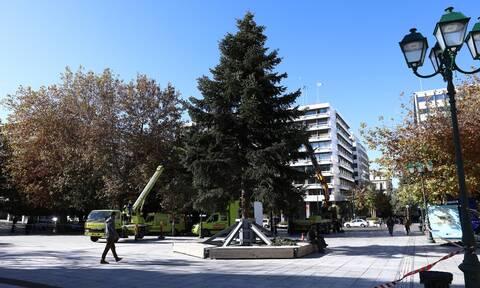 Στήθηκε το χριστουγεννιάτικο δέντρο στο Σύνταγμα (pics)