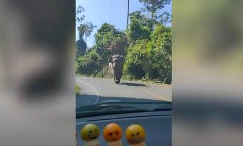 Λαχτάρα: Εξαγριωμένος ελέφαντας ορμάει σε οικογενειακό αυτοκίνητο! (video)