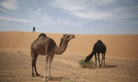 Οι ΗΠΑ «χάρισαν» ολόκληρη τη Δυτική Σαχάρα στο Μαρόκο - Αυτός είναι ο νέος χάρτης της χώρας