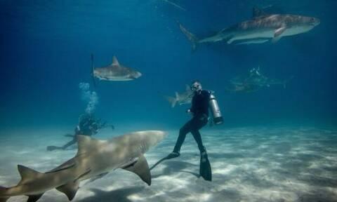Βούτηξαν για δελφίνια αλλά έπεσαν πάνω σε… καρχαρίες!