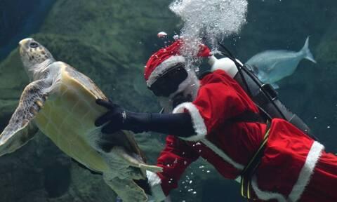 Ο «υποβρύχιος» Άγιος Βασίλης του Ενυδρείου Κρήτης