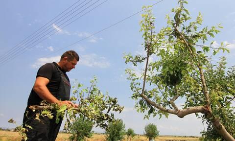 Υπουργείο Αγροτικής Ανάπτυξης: Ακατάσχετες και αφορολόγητες οι ενισχύσεις των αγροτών