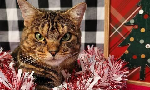 Αυτή είναι η πιο «θυμωμένη» γάτα που έχετε δει και είναι αξιολάτρευτη