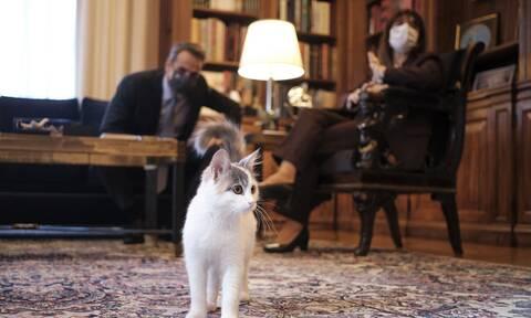 Όταν ο Πρωθυπουργός γνώρισε τη γάτα της Προέδρου της Δημοκρατίας