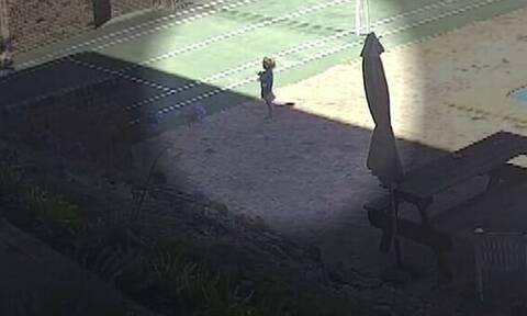Αυστραλία: Η στιγμή που δηλητηριώδες φίδι δαγκώνει 3χρονο κορίτσι στον κήπο του σπιτιού του