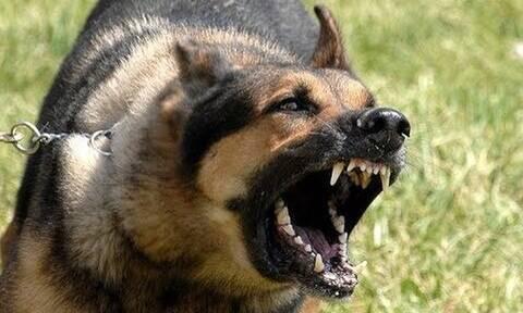 Αγγλία: Απίστευτο! Αγριεμένος σκύλος απειλούσε τους παίκτες – Διακόπηκε οριστικά το ματς