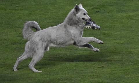 Απίστευτη διακοπή σε αγώνα: Σκύλος εισέβαλε στο γήπεδο και έκλεψε παπούτσι (video+photos)