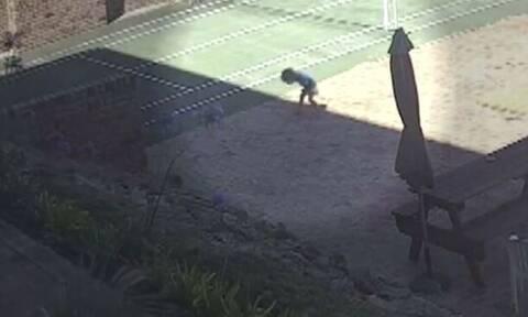 Στιγμές αγωνίας για 3χρονο κοριτσάκι: Το δάγκωσε φίδι - Σωτήρια η επέμβαση της γιαγιά της (vid)
