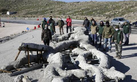 Μυτιλήνη: Τι μαρτυρούν οι απολιθωμένοι κορμοί δέντρων που βρέθηκαν στις νέες ανασκαφές