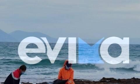 Εύβοια: Βρέθηκε πτώμα γυναίκας σε παραλία – Έρευνες για τα αίτια