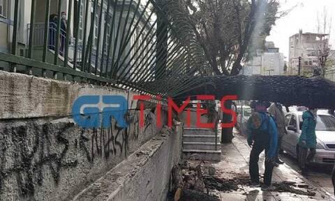 Θεσσαλονίκη: Δέντρο έπεσε σε αυλή δημοτικού σχολείου – Από θαύμα δεν τραυματίστηκαν μαθητές