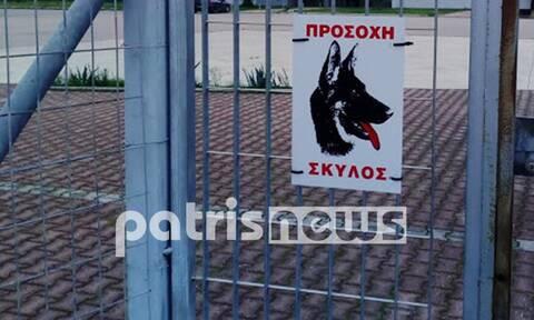 Ηλεία: Αυτά είναι τα σκυλιά που κατασπάραξαν τον 56χρονο - Φόβοι πως έχουν προσβληθεί από λύσσα
