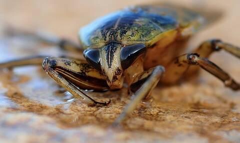 Θα τρώμε έντομα μέσα στο 2021; Η ΕΕ εγκρίνει την προσγείωση τους στα πιάτα Ευρωπαίων