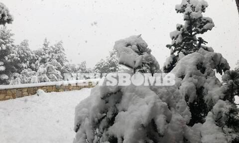 Ρεπορτάζ Newsbomb.gr - Κακοκαιρία «Λέανδρος»: Ο χιονιάς σαρώνει τη Μαλακάσα