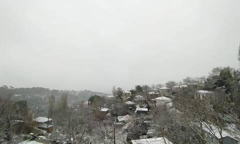 Κακοκαιρία «Λέανδρος»: Χιόνια μέχρι και στη Μυτιλήνη - Λευκό τοπίο όλο το νησί