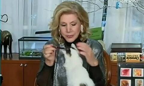 Χαμός στον «αέρα»: Γάτος επιτέθηκε στη Λίτσα Πατέρα!