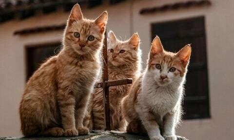 Κύπρος: Aυξάνονται οι εγκαταλελειμμένες γάτες λόγω κορονοϊού (pics+vid)