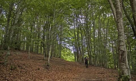 Δολοφόνησε τον πεθερό του και τον τσιμέντωσε στο δάσος