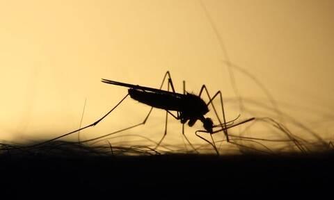 Παγκόσμια ανησυχία: Φόβοι για νέα πανδημία από τα κουνούπια - Οι ασθένειες που μεταδίδουν