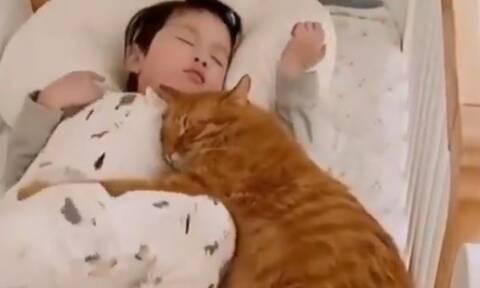 Ο πιο χαδιάρης γάτος του διαδικτύου είναι αυτός