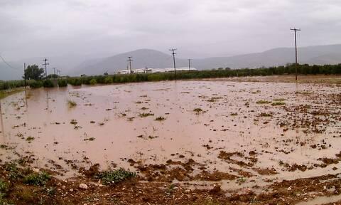 Κακοκαιρία Ηλεία: «Βούλιαξε» ο δήμος Ανδρίτσαινας - Κρεστένων - Πλημμύρες και κατολισθήσεις