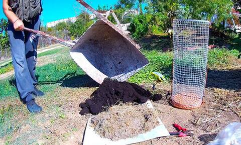 Έτσι θα φυτέψετε κρεμμύδια και σκόρδα σε αυτοσχέδιο «πύργο» (video)