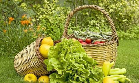 Επιδότηση έως 2.000 ευρώ για βιολογικές καλλιέργειες - Μέχρι πότε μπορείτε να κάνετε αίτηση